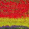 Vinagre para limpiar los azulejos l nea de consumo blogs - Azulejos colorines ...
