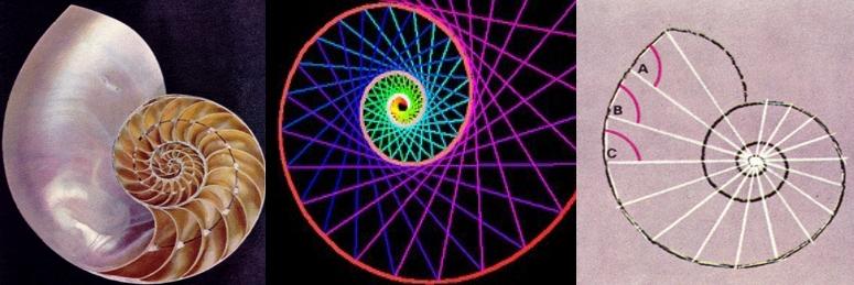 Resultado de imagen de la forma espiral en los caracoles