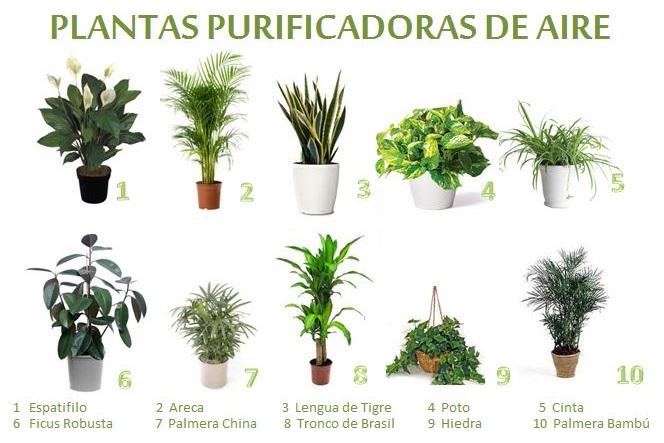 2015 agosto ciencia f cil - Tipos de plantas de exterior ...