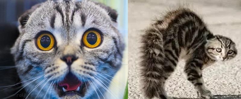 03-gatos-en-alerta