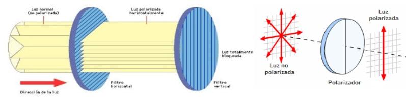 Curiosidades naturales y luz polarizada  d3661521d295