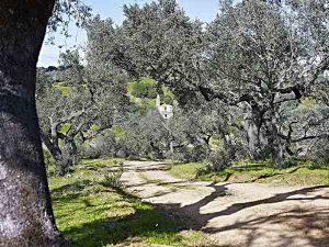 Camino de acceso al Convento de la Luz (V. Gibello).
