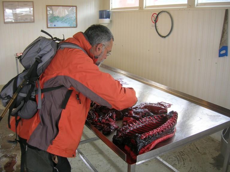 Con el maestro Javier Knorr, probando la mayor fuente de vitamina C animal, el hígado crudo de foca. Qaqortoq 2011