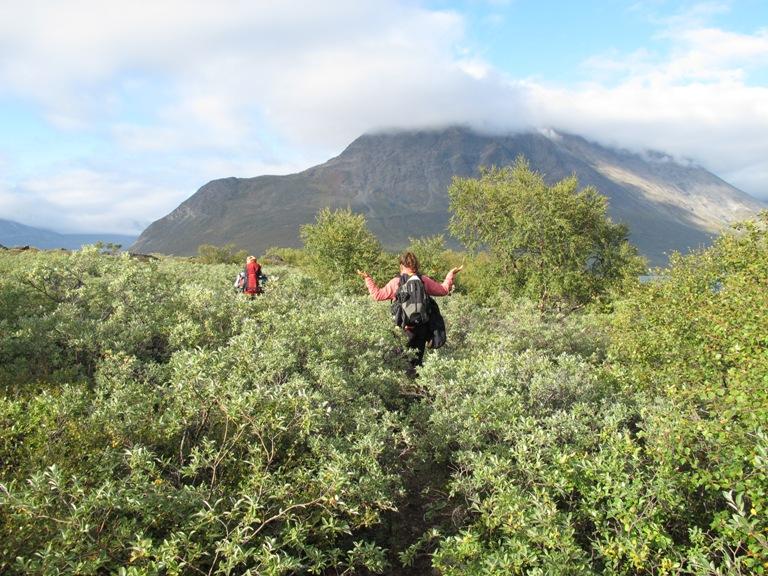 """""""Bosque"""" groenlandés de abedul y sauce. Se dice que si te pierdes en un bosque groenlandés, para encontrar el camino solo tienes que hacer una cosa…levantarte y ponerte en pié, jejejeje. Península de Nuugaarsuk 2011"""