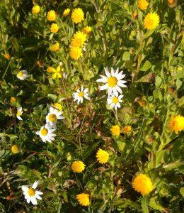 flores-invierno-2