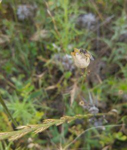 especie-de-mosca