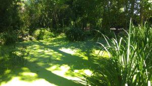 sombras-en-el-estanque