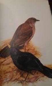 Terence Lambert (Pájaros de bosque y de jardín, Ediciones Mensajero).